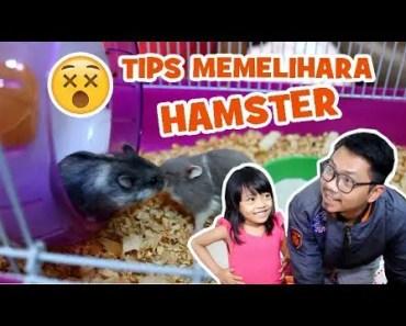 Cara Memelihara Hamster Yang Benar Ala Zelda Zia - cara memelihara hamster yang benar ala zelda zia