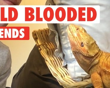 Cold Blooded Friends | Reptiles Compilation - cold blooded friends reptiles compilation