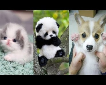 Cute baby animals Videos Compilation cute moment of the animals - Soo Cute! #7 - cute baby animals videos compilation cute moment of the animals soo cute 7