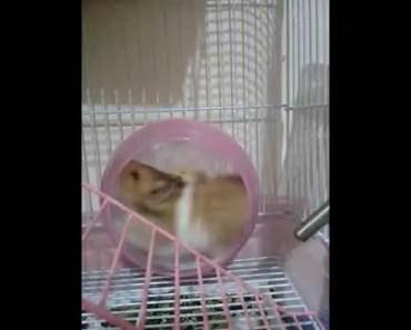 Cute hamster - cute hamster