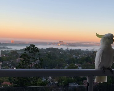 Funny cockatoo on foggy day - funny cockatoo on foggy day
