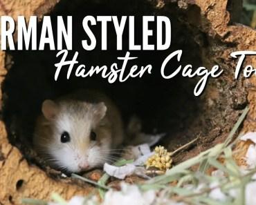 GERMAN INSPIRED HAMSTER CAGE TOUR - german inspired hamster cage tour