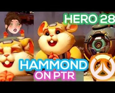 Hammond On PTR - Hero 28 - Hamster Son - hammond on ptr hero 28 hamster son