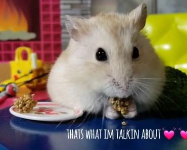Hamster Diaries: Tiny Hamster Tries Broccoli [Cute Hamster Video] - hamster diaries tiny hamster tries broccoli cute hamster video