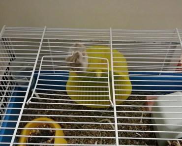 Hamster master escape artist - hamster master escape artist