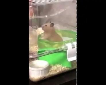 Hamster spinning around - hamster spinning around