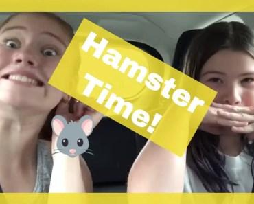 Hamster Time - hamster time