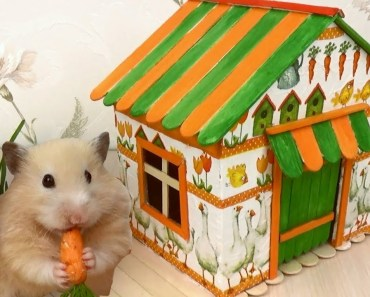 How to Make Village House for Hamster - Popsicle Sticks & Cardboard & Decoupage - how to make village house for hamster popsicle sticks cardboard decoupage