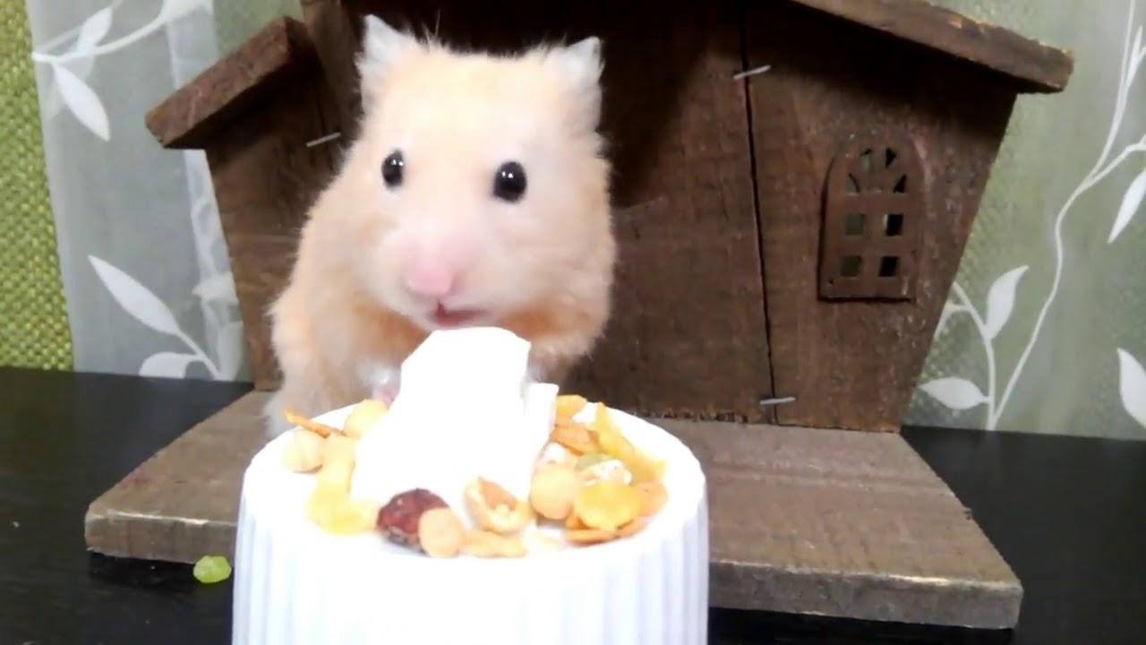 Lets Eat A Birthday Cake For My Hamster Hamster Care Sheet