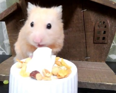 Let's eat a birthday cake for my hamster - lets eat a birthday cake for my hamster