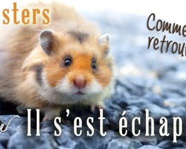 Mon hamster s'est échappé! Fugues : comment rattraper son hamster en fuite? - mon hamster sest echappe fugues comment rattraper son hamster en fuite