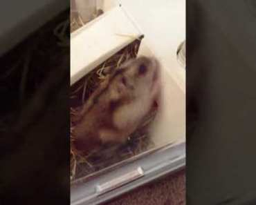 My hamster - my hamster