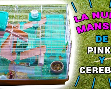 NUEVA MANSIÓN RATITAS DE LABORATORIO PINKY Y CEREBRO | El Gallinero de Mike - nueva mansion ratitas de laboratorio pinky y cerebro el gallinero de mike