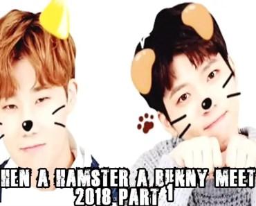 WooGyu : WHEN A HAMSTER AND BUNNY MEET 2018 - woogyu when a hamster and bunny meet 2018