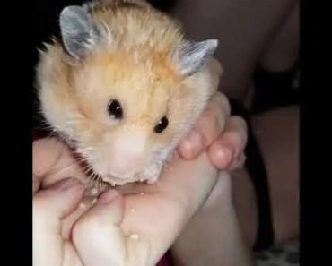 Funny hamster - 1534099449 funny hamster