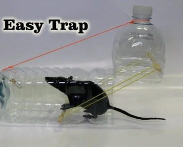 5 Easy Mouse/Rat Trap - 5 easy mouse rat trap