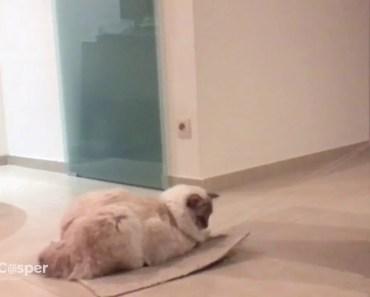 Cute Cat riding his flying carpet - Funny Cat Video - cute cat riding his flying carpet funny cat video