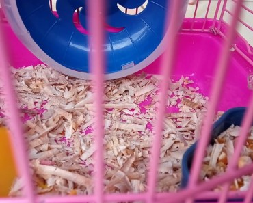 Cute Hamster! FUNNY Videos! - cute hamster funny videos
