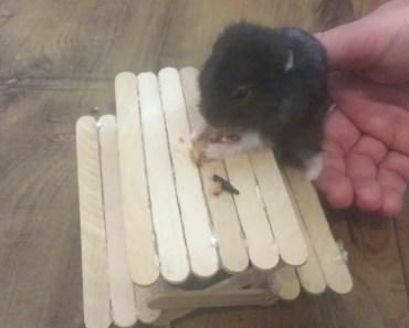 DIY Hamster Treats With My Sister - diy hamster treats with my sister