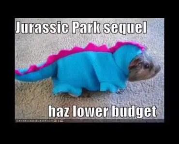 funniest hamster video ever #2 - funniest hamster video ever 2