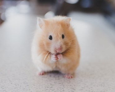 Funny & Cute Hamsters Compilation Video - Funny Hamster 2018 - funny cute hamsters compilation video funny hamster 2018