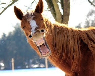 Funny Horse Video - Try Not Laugh - funny horse video try not laugh