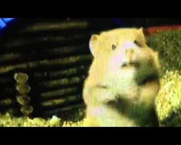 G-Force Funny Clip Meeting Bucky The Hamster - g force funny clip meeting bucky the hamster