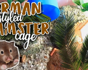 GERMAN STYLE HAMSTER CAGE TOUR! | Hamster Care - german style hamster cage tour hamster care