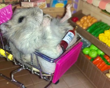 Greedy hamster goes to the supermarket - Cute and funny videos of hamsters - greedy hamster goes to the supermarket cute and funny videos of hamsters