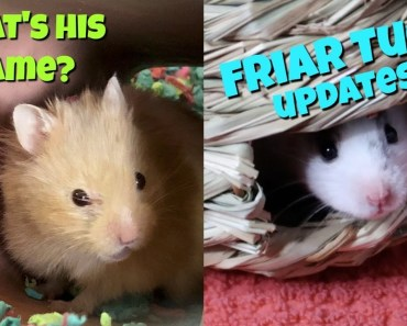 HAMSTER UPDATES AND NAME ANNOUNCEMENT - hamster updates and name announcement