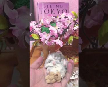 Happy hamster in his happy tree house - Cute and funny videos of hamsters - happy hamster in his happy tree house cute and funny videos of hamsters