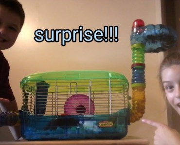 I surprised him with a hamster [really funny] - i surprised him with a hamster really funny
