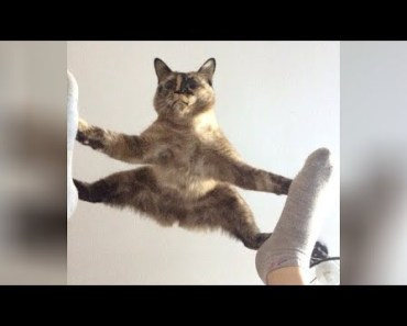 It's TIME for SUPER LAUGH! - Best FUNNY CAT videos - its time for super laugh best funny cat videos