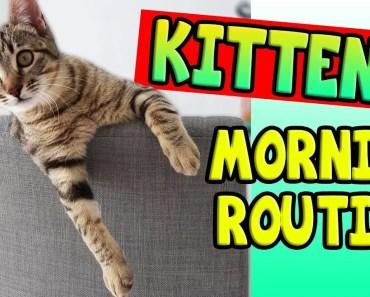 KITTEN'S MORNING ROUTINE! - kittens morning routine