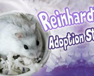 Meet Reinhardt | My Winter White Hamster Adoption Story - meet reinhardt my winter white hamster adoption story