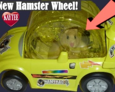 MY HAMSTER DRIVES A CAR !!!!!!!!!!!!!!!!!!!!!!!!!!!!!!!!! - my hamster drives a car