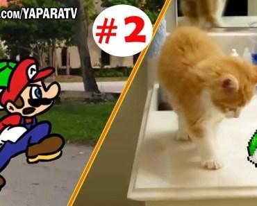 Super Mario Bros and Funny animals part 2 - Cats and dogs fail compilation - super mario bros and funny animals part 2 cats and dogs fail compilation