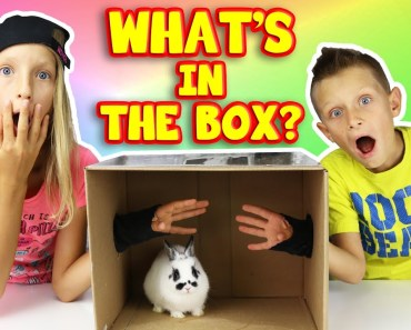 What's in the Box Challenge!!!!! - whats in the box challenge