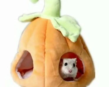 Pumpkin shape hamster nest MYIDEA® PET -