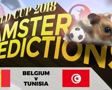 World Cup 2018 Hamster 'Predictions': Belgium v Tunisia -