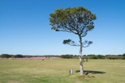 木とコスモスの写真
