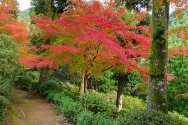 紅葉の写真