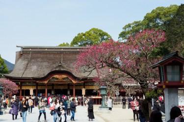 太宰府天満宮の梅の写真