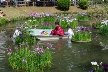 菖蒲を刈る神職の写真