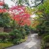 紅葉 友泉亭公園(2020年11月18日)