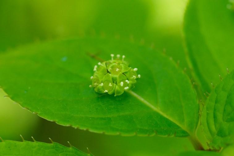 筥崎宮花庭園の季節の花の写真