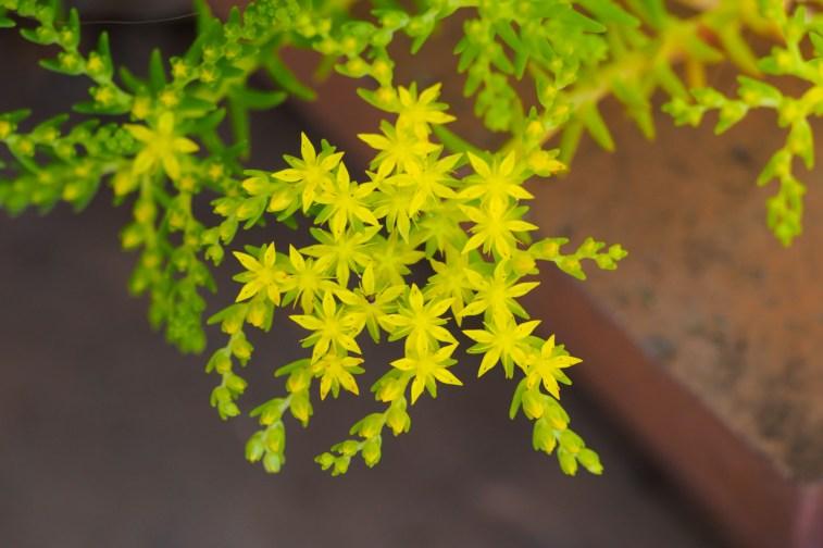 海の中道海浜公園の季節の花の写真