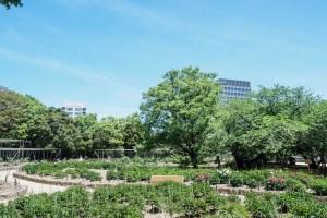 舞鶴公園の牡丹芍薬園の写真