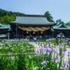 花菖蒲 宮地嶽神社(2021年5月31日)
