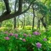 紫陽花と季節の花 海の中道海浜公園(2021年6月24日)